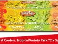 awe-tropical-coolers